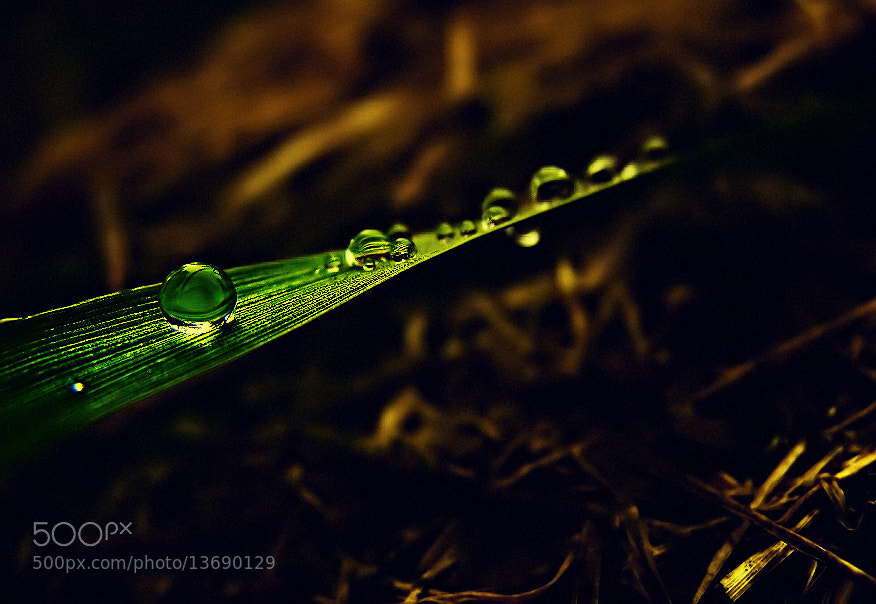 "Photograph Miss "" Drop "" by EMERALD WAKE © on 500px"