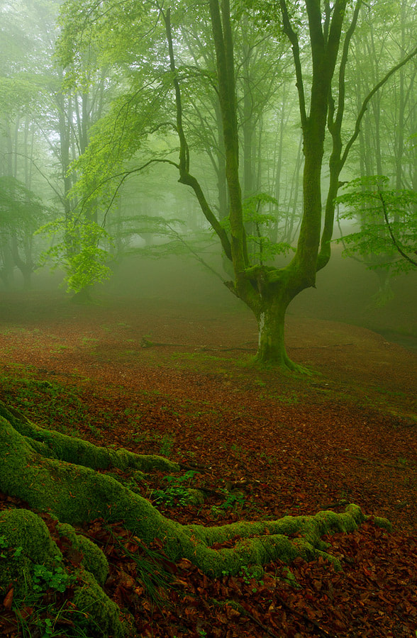 """Photograph """" Feeling in Green """" by Juan Pavon on 500px"""