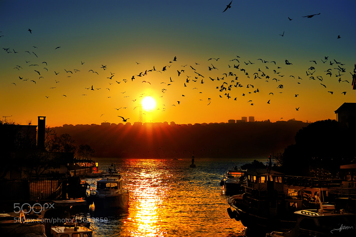 Photograph Serenade of Birds at the Sunset by Alp Cem on 500px