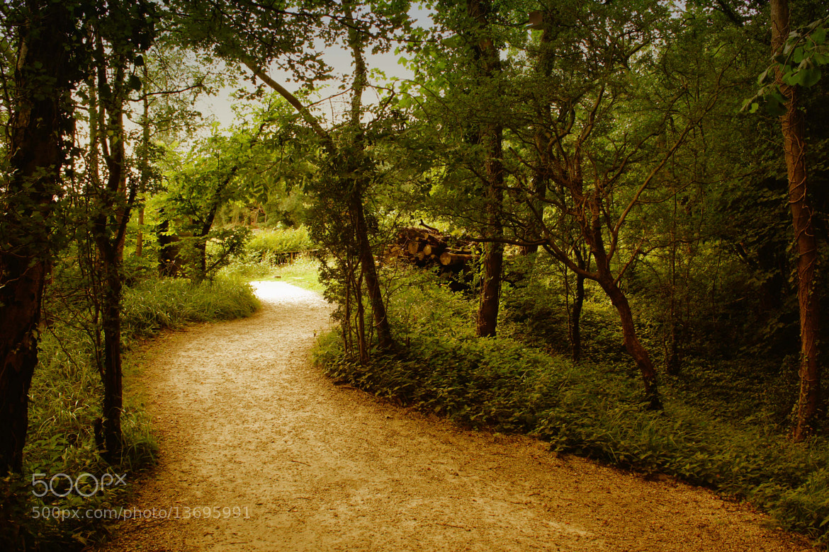 Photograph Just a walk in the park! by Kate Thomas on 500px