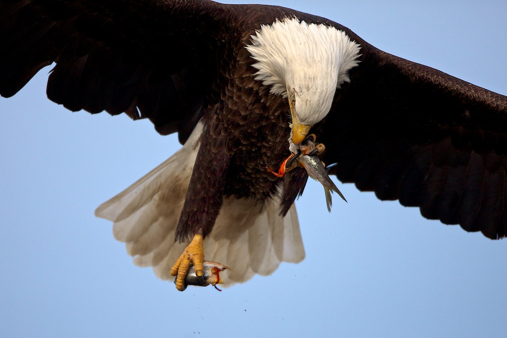 Photograph In Flight Meal by Buck Shreck on 500px