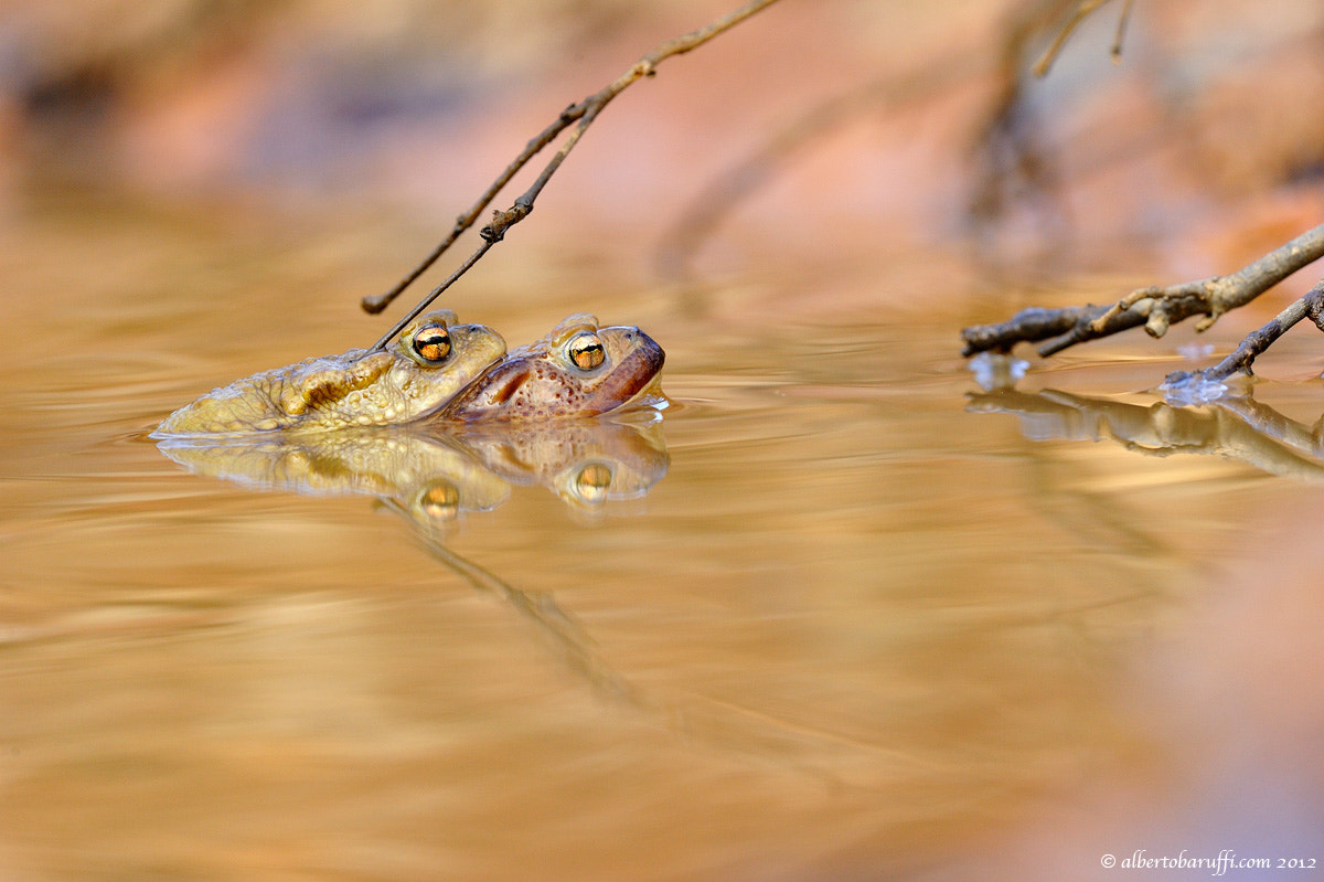 Photograph in the pond by Alberto Baruffi on 500px