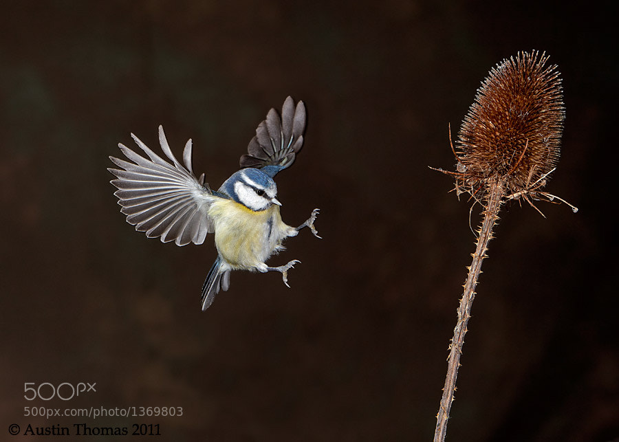 Photograph Coming in to land by Austin Thomas on 500px