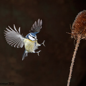 Coming in to land by Austin Thomas (Austin_Thomas)) on 500px.com