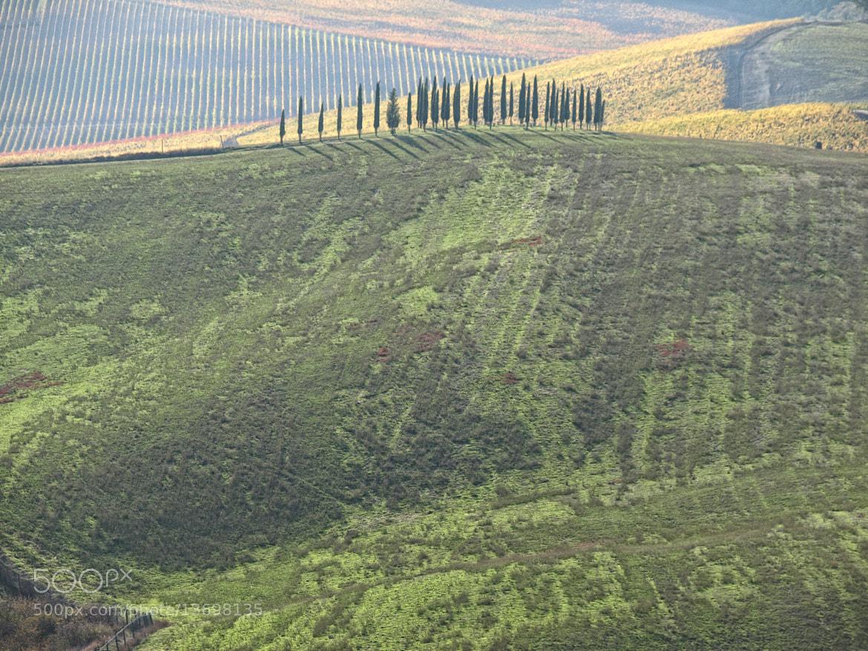 Photograph Cipressi sul verde velluto by Michele Alderighi on 500px