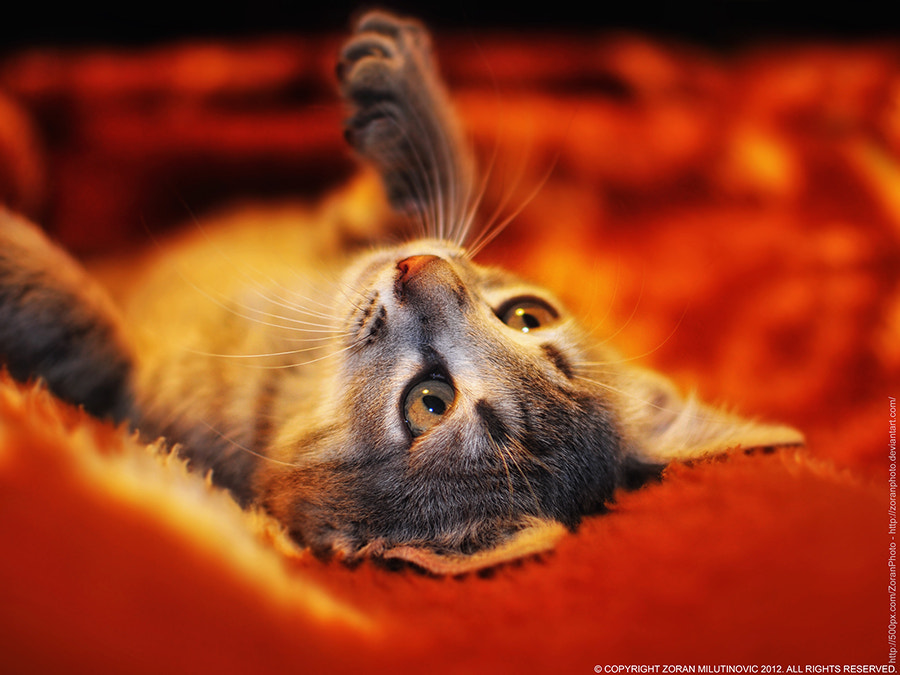 Photograph  Awakening pt.2. by Zoran Milutinovic on 500px