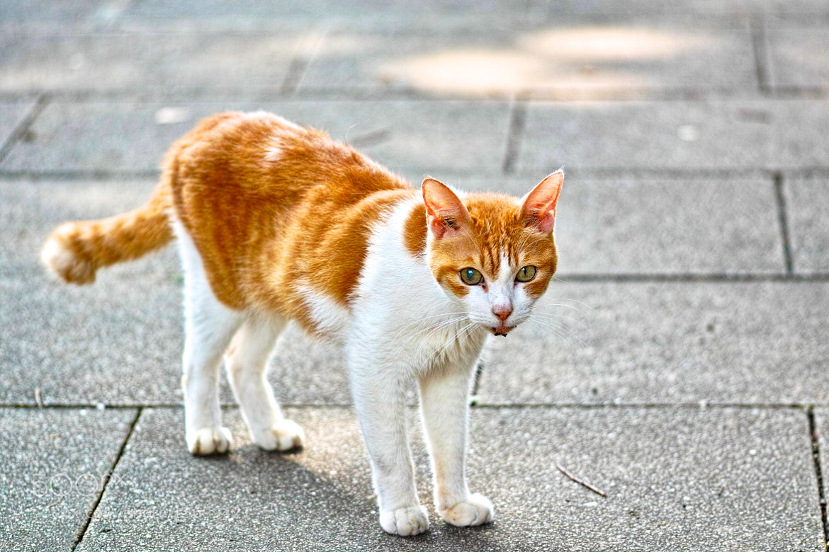 Photograph Cat posing by marbee .info on 500px