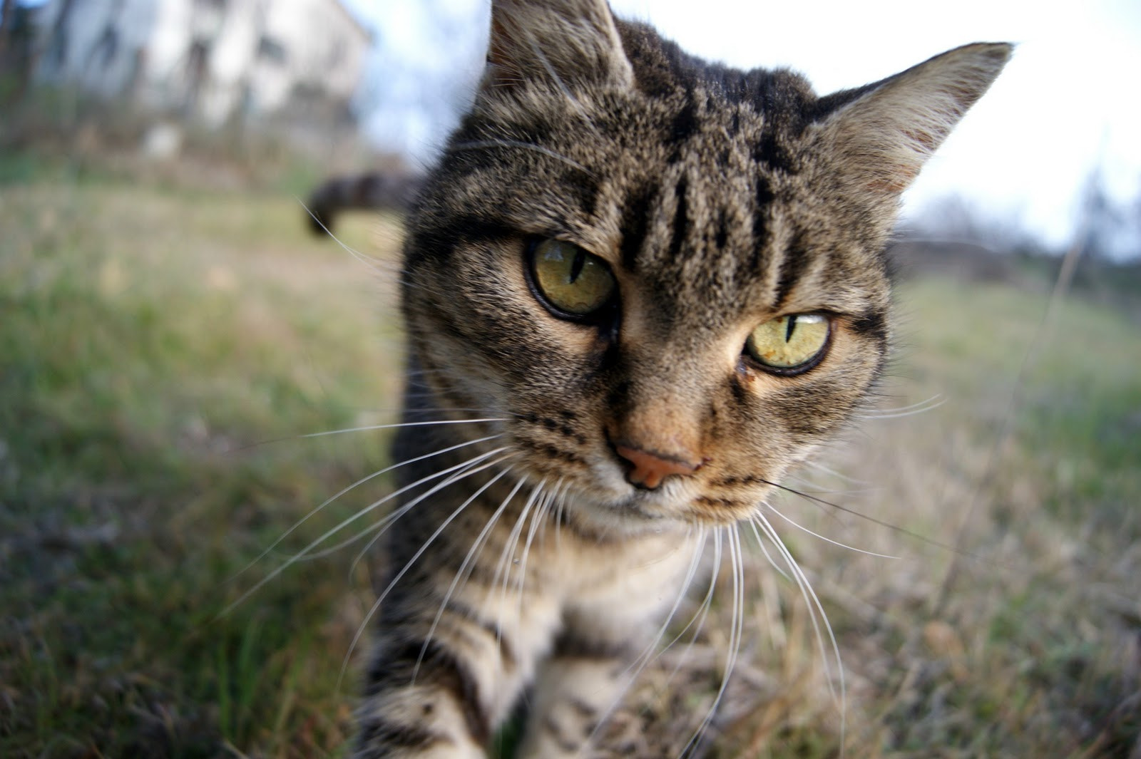 Photograph Cat by Federica Villa on 500px