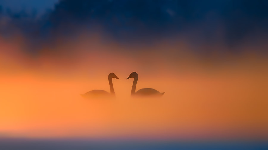 In Love by Bogdan Panait on 500px.com