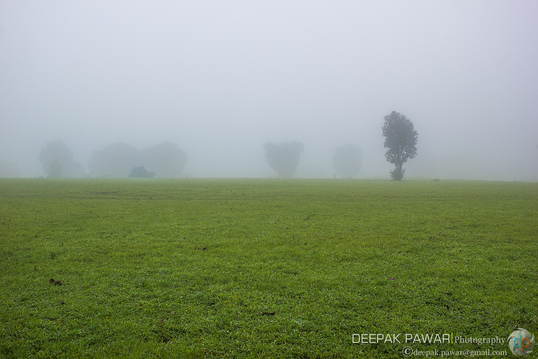 Photograph Trees in the mist by Deepak Pawar on 500px