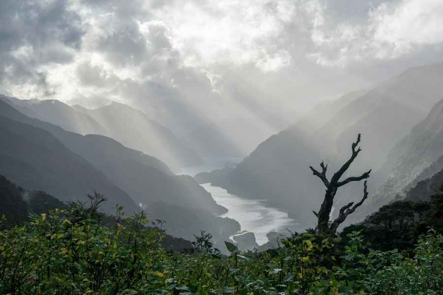 Doubtful Sound by Andi Scharfstein on 500px.com