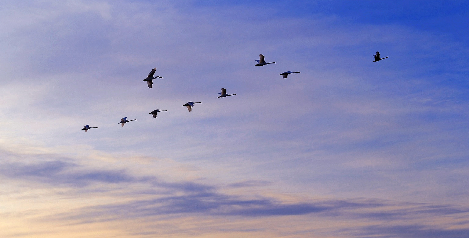 Photograph Migrations by Pascal-Ludovic Saissi on 500px