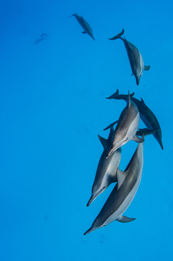 Dolphines having fun #2