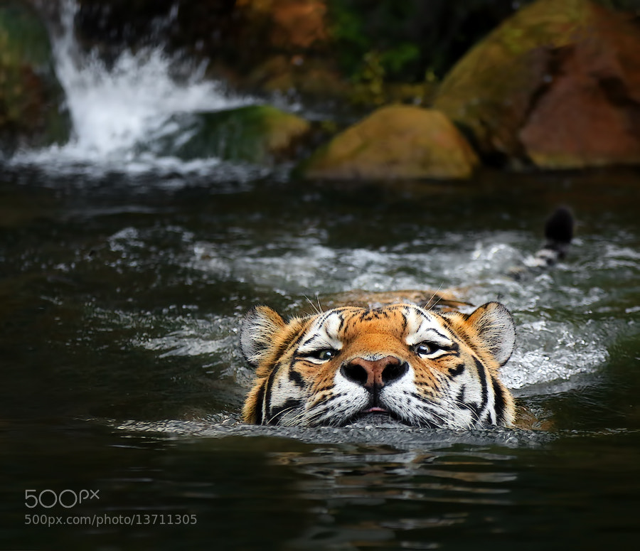 Photograph At the wild river by Klaus Wiese on 500px