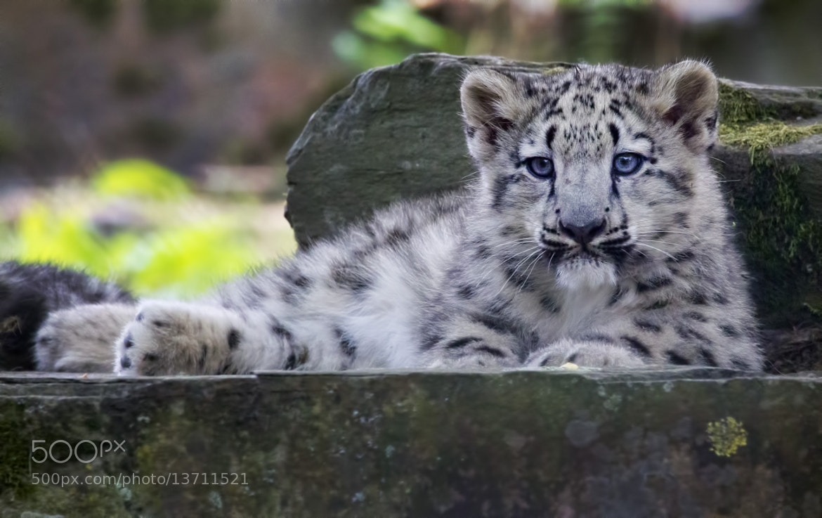 Photograph Blue Eyes by Alida Jorissen on 500px