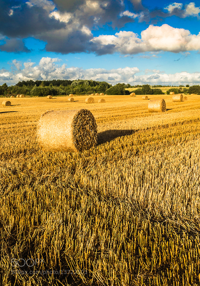 Photograph Fields of Gold by Andy Butler on 500px