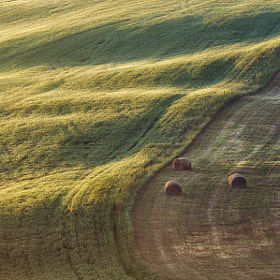 The morning light caresses the uncut hills, while the three bales waiting to be picked