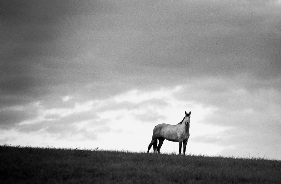 white horse, hill, stormy sky, black and white