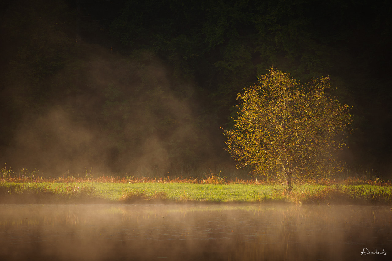 Photograph Tree in the morning by Alexander Derenbach on 500px
