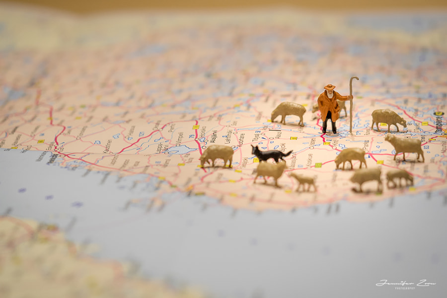 Let's time for travel: Sheep