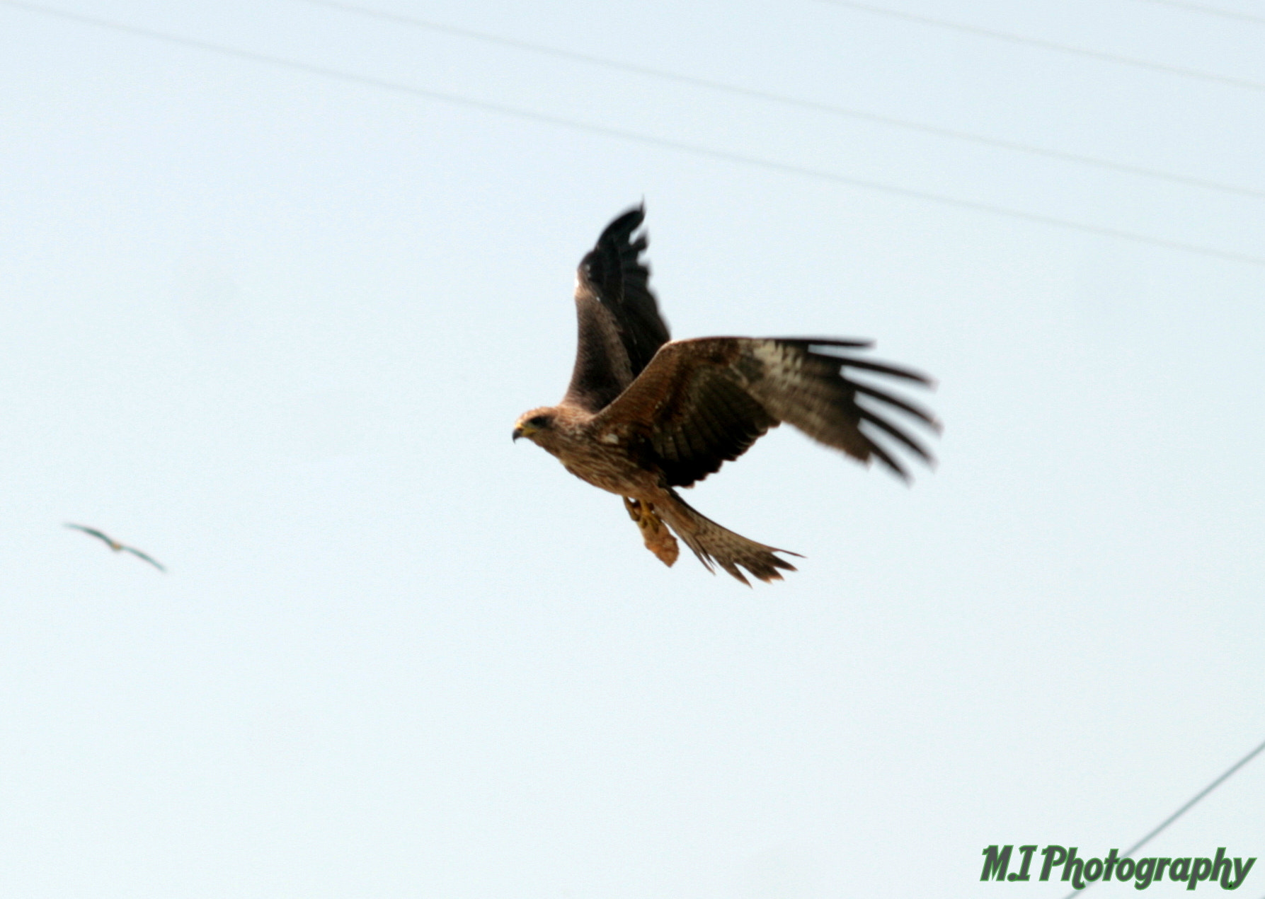 Photograph Flying  by Mohamed Ismael on 500px