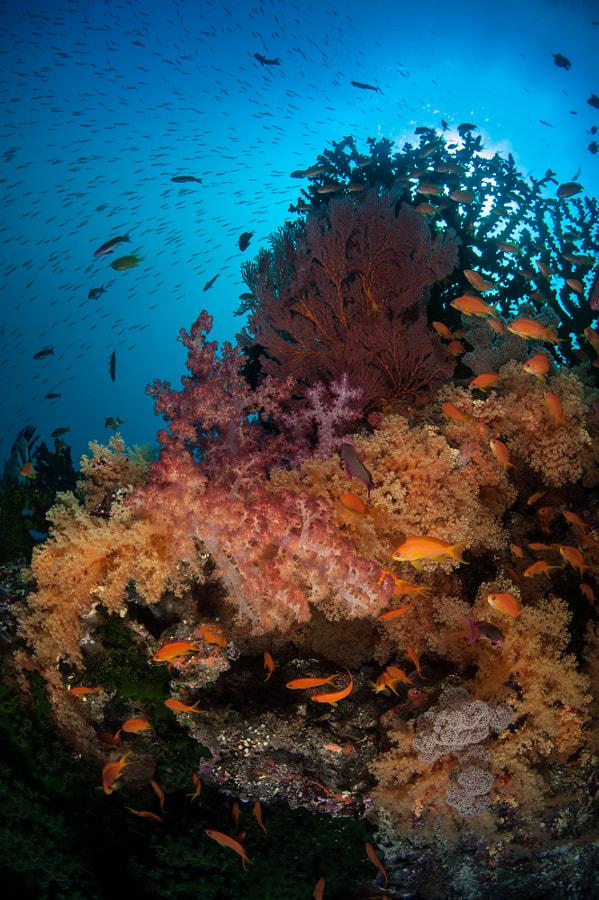 Colors of Fiji