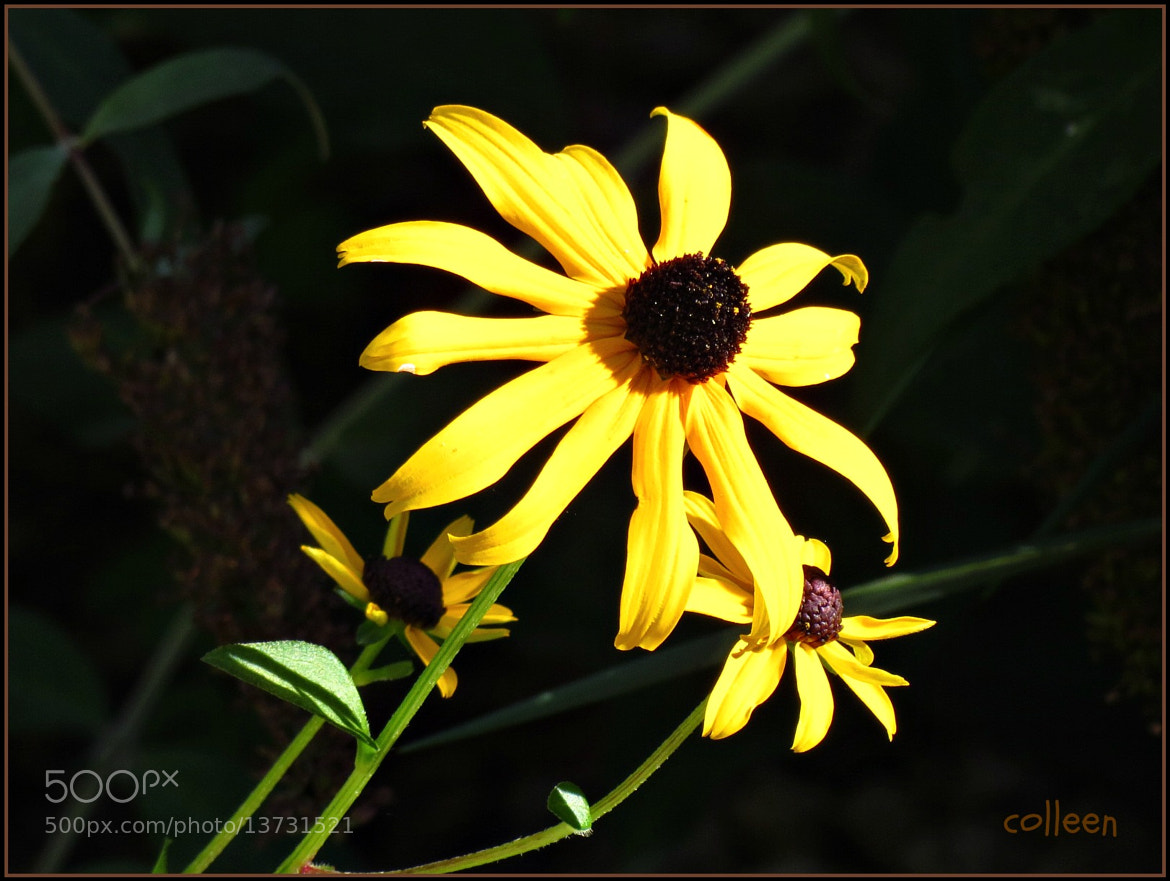 Photograph Reaching For Warmth! by colleen thurgood on 500px
