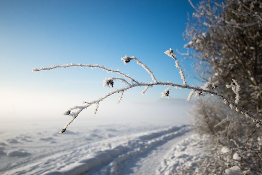 Winter pathway