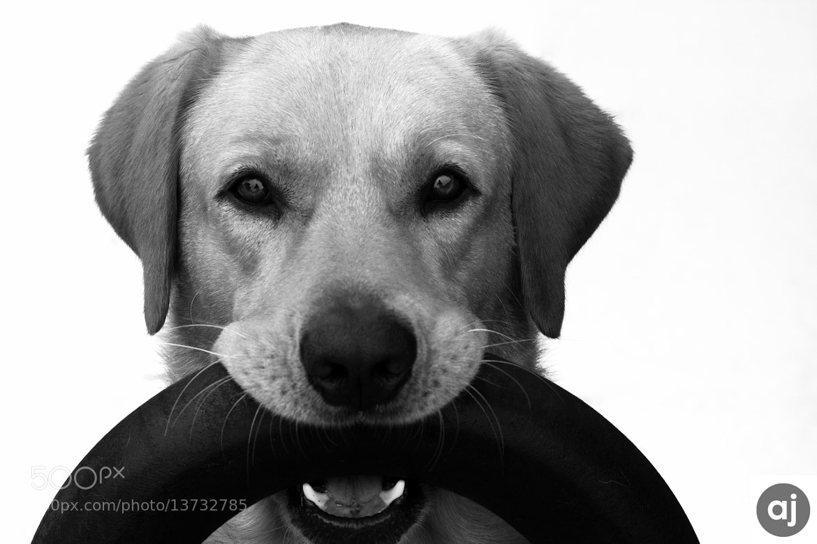 Photograph Radar wants to play by Adilson Passos on 500px
