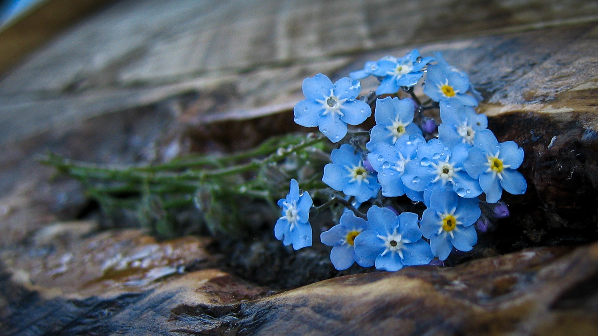 Photograph Flowers by S. Ratnikoff on 500px