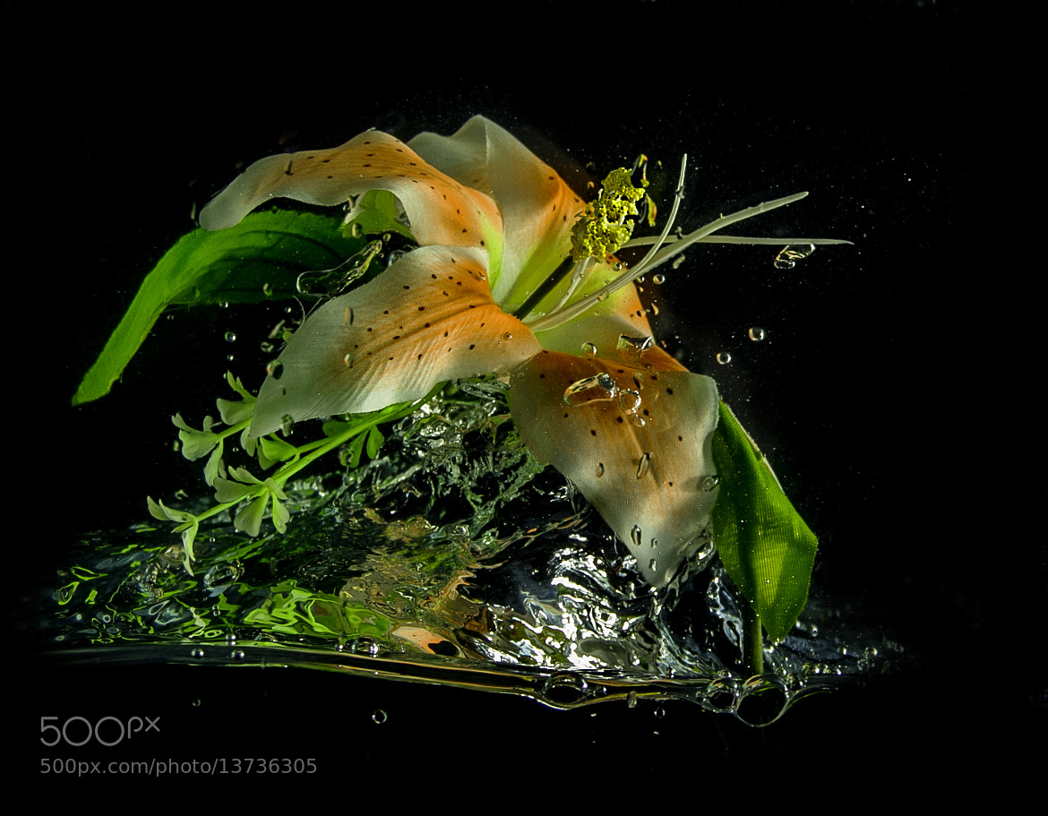 Photograph flower taking off by Weiller :-) on 500px