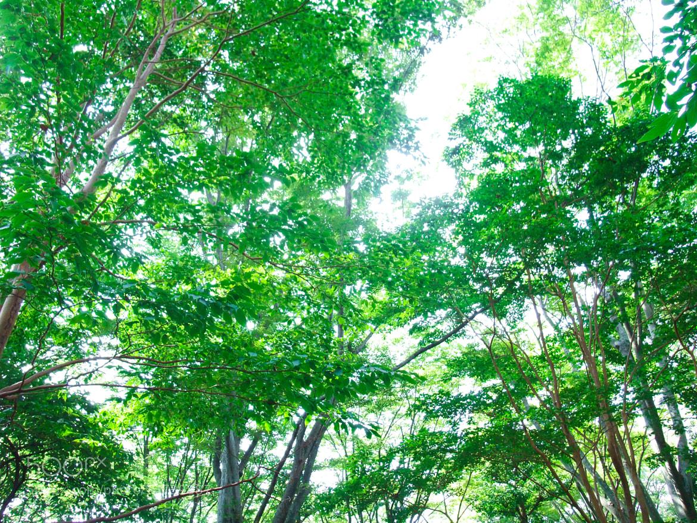 Photograph Sunlight green by Kanae Kazami on 500px
