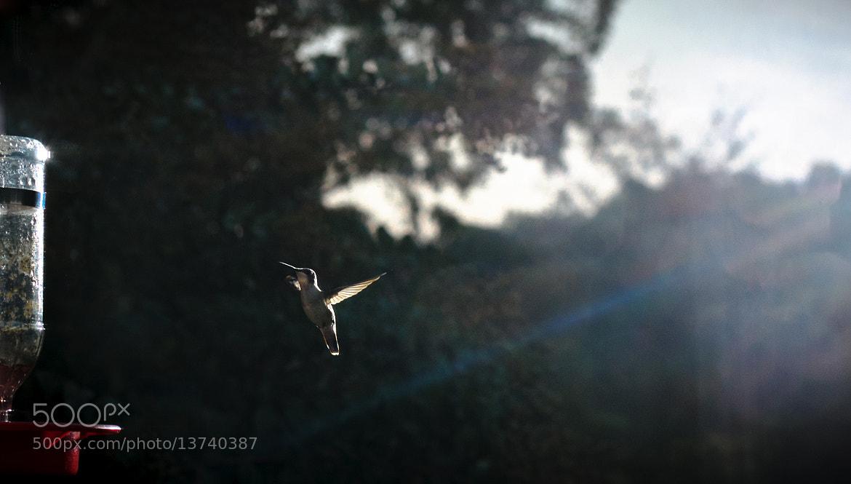 Photograph LIGHT by Blake Johnson on 500px