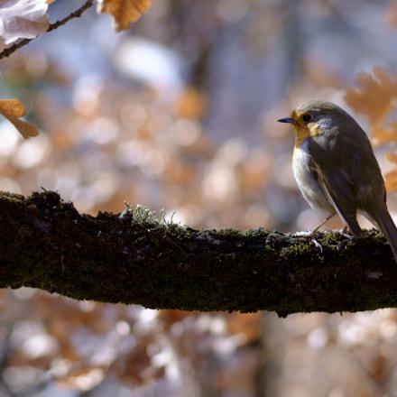 A vain bird