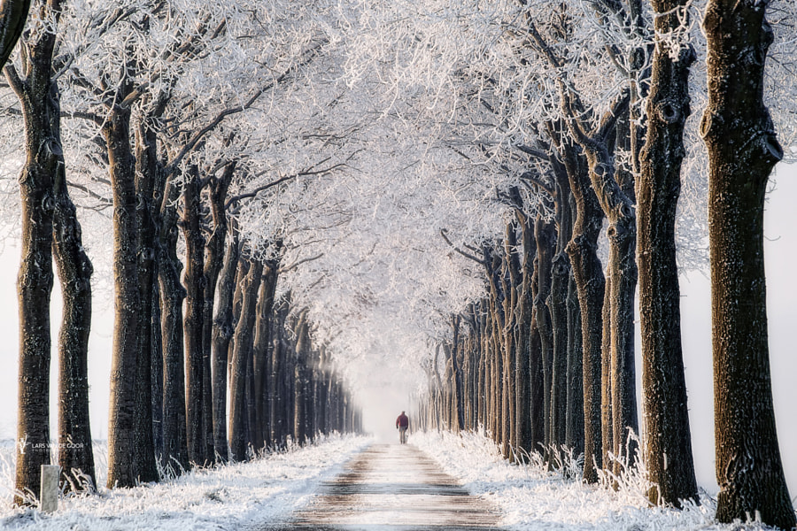 Endless Winter by Lars van de Goor on 500px.com