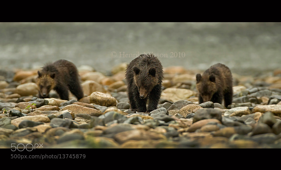 Photograph Three Little Bears by Henrik Nilsson on 500px