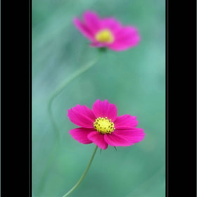 Lovely by Shihya Kowatari (ShihyaKowatari)) on 500px.com