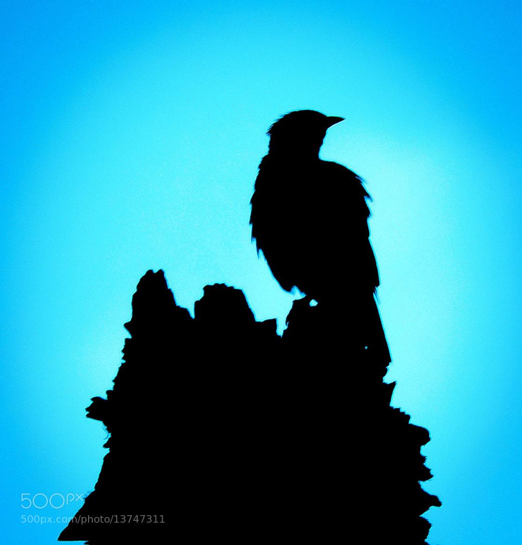 Photograph Blue bird by Utsav Lall on 500px