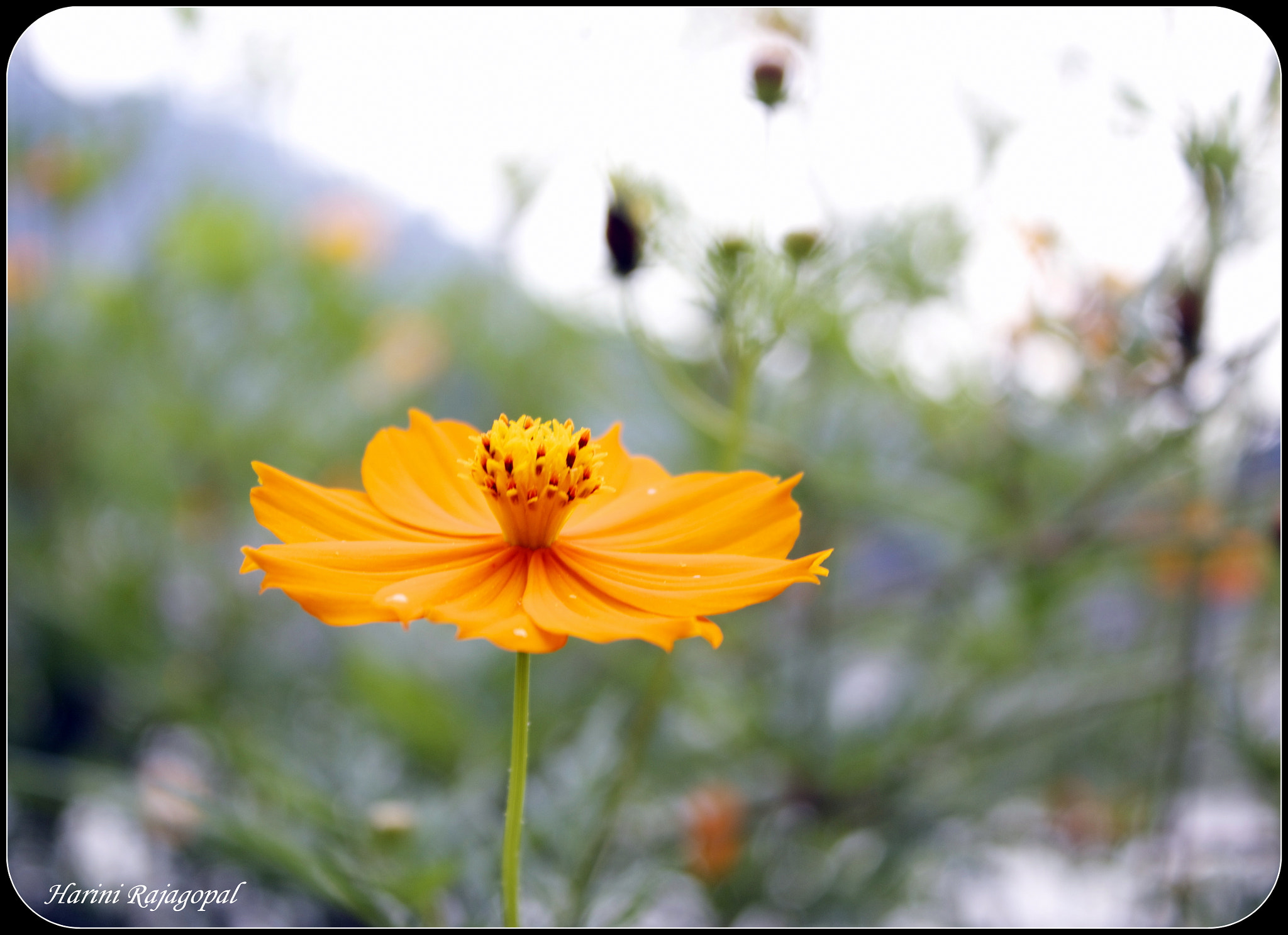 Photograph Untitled by HARINI RAJAGOPAL on 500px