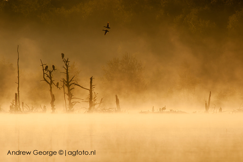 Photograph First flight by Andrew George on 500px