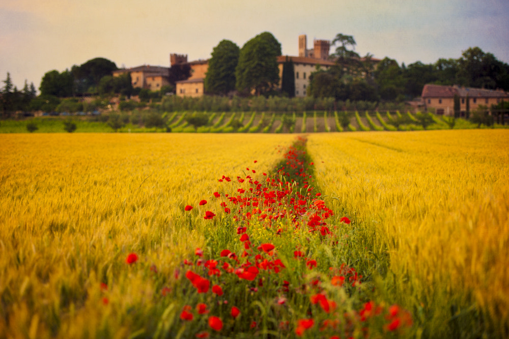 Photograph Tuscany Dreamland by Allard Schager on 500px