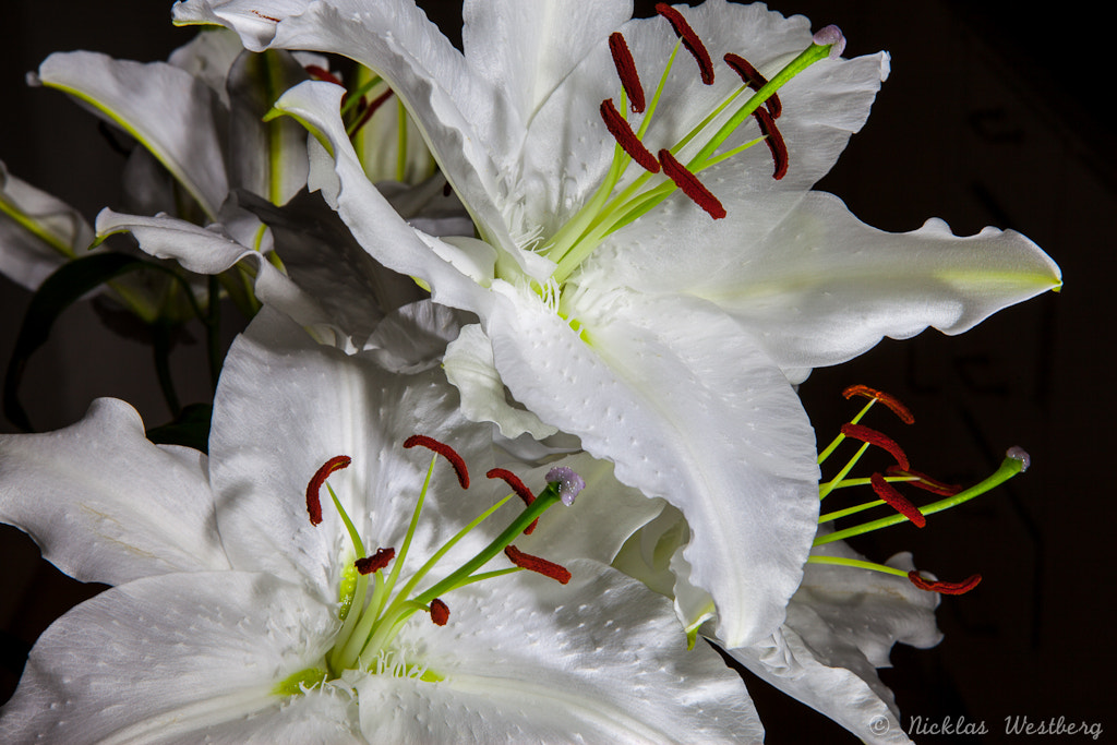 Photograph Lilies by Nicklas Westberg on 500px
