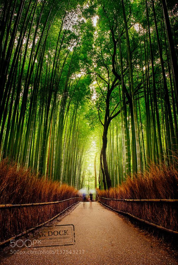 Rainy Arashiyama