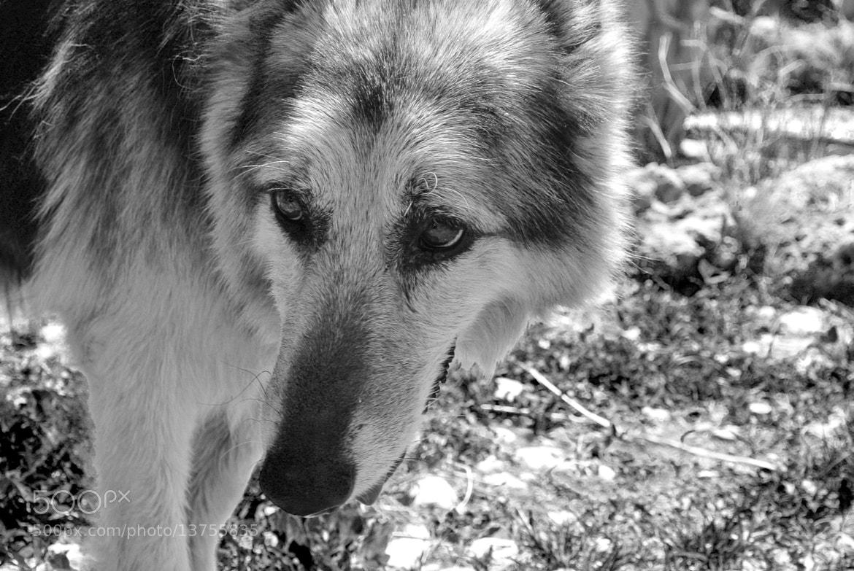 Photograph Oldage - Lucky by Francesco  Alamia  on 500px