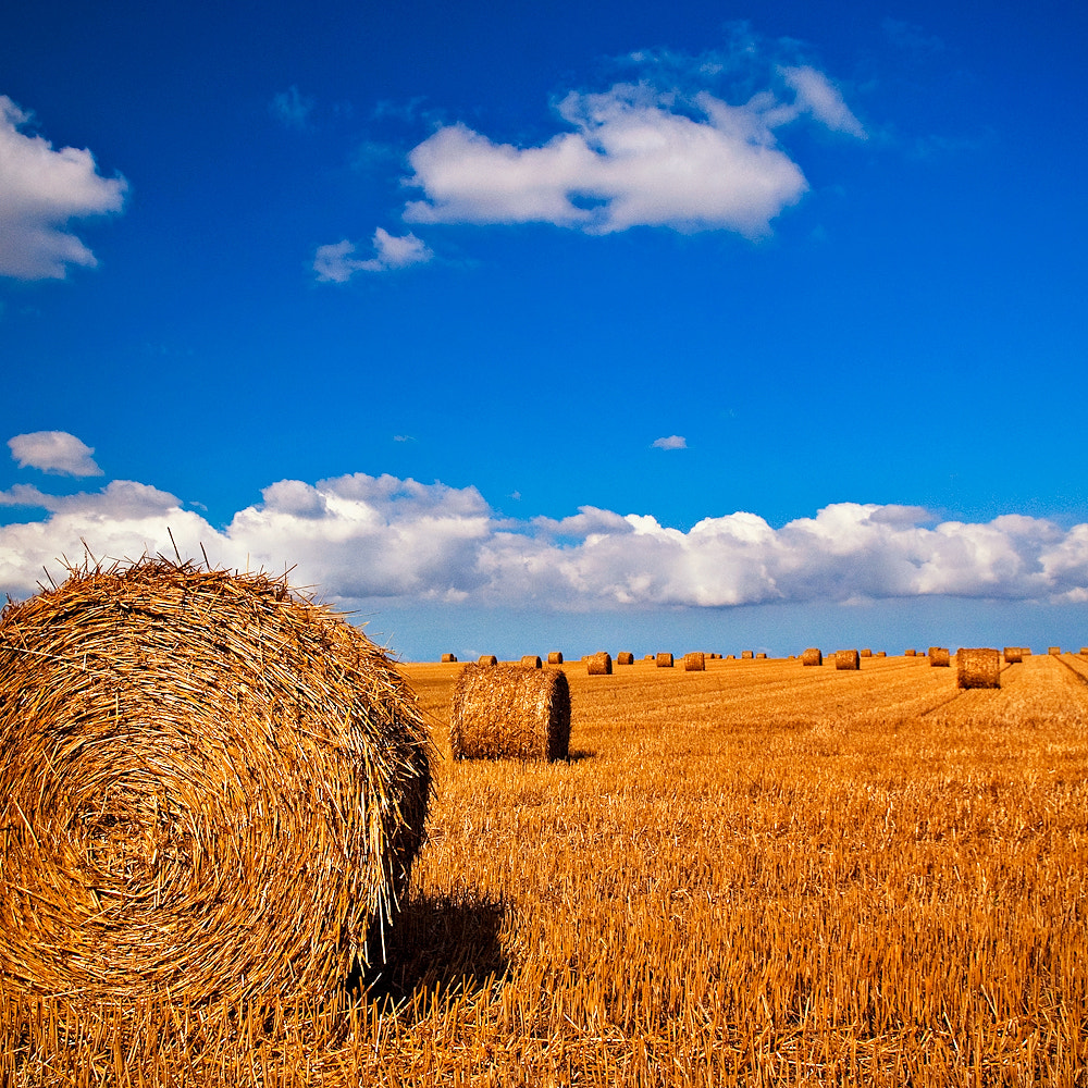 Photograph Normandy without hay circles is like a bird without songs by Allard Schager on 500px
