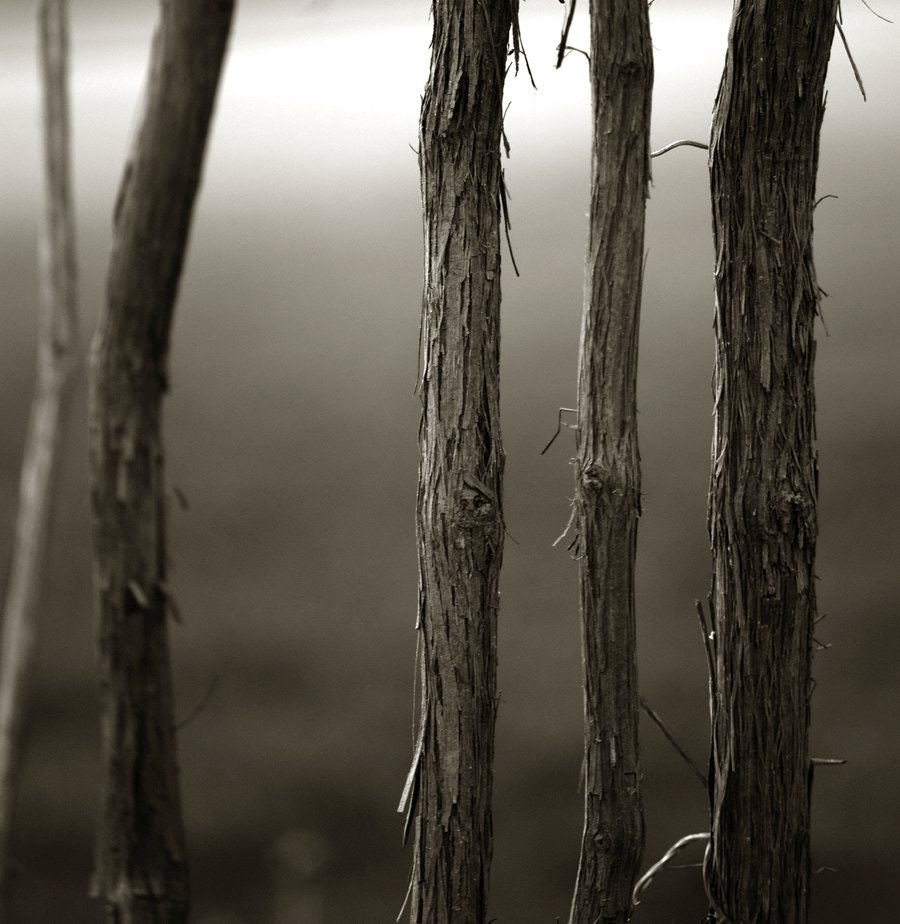 Photograph Lines by karen fiore on 500px