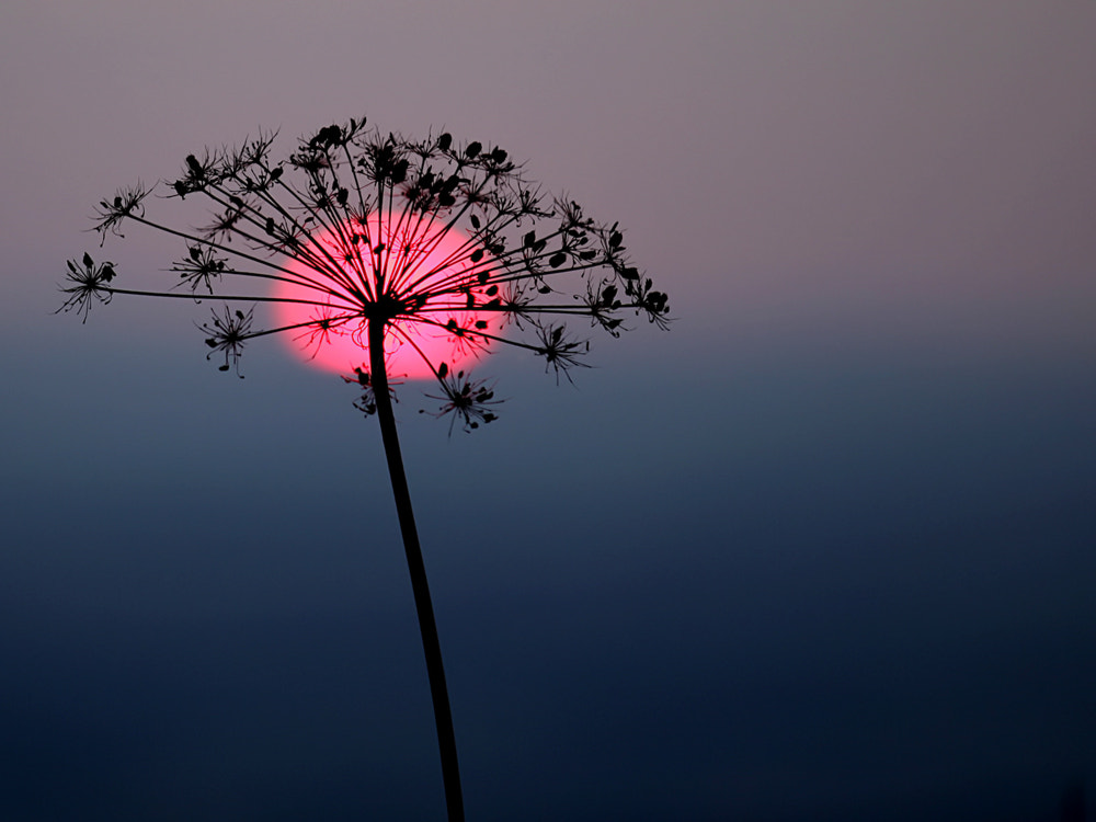 Photograph pink sunset by SuSanne MarX on 500px