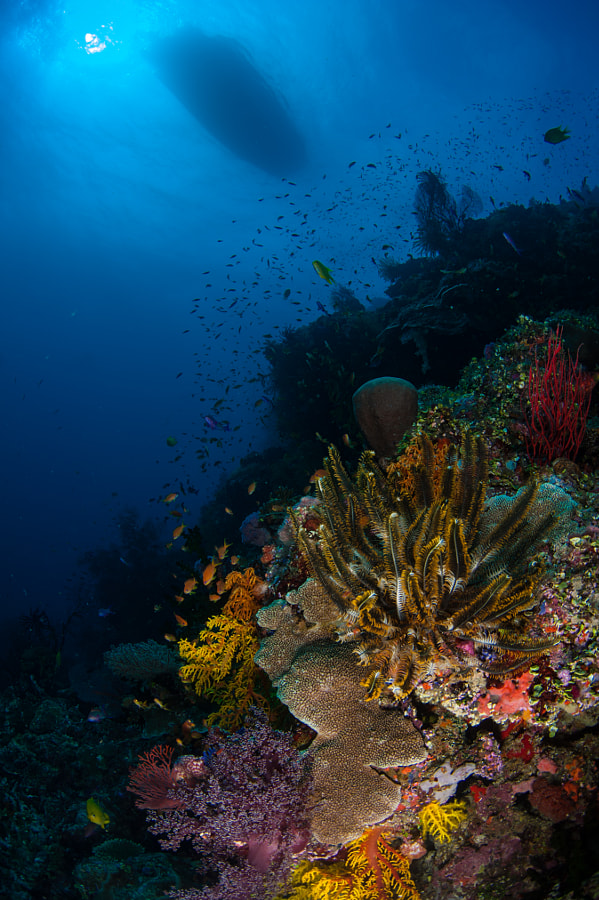 Fijian Coral Reef