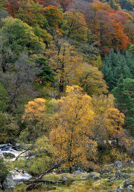 Photograph Autumn Colours by Damien Wogan on 500px