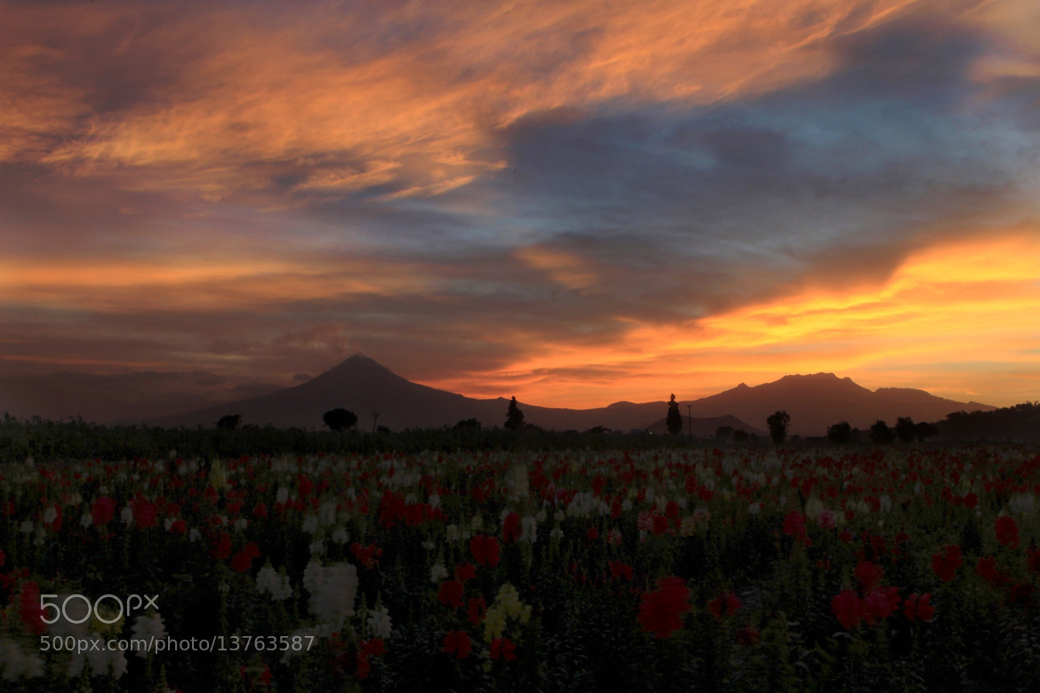Photograph Sunset and flowers by Cristobal Garciaferro Rubio on 500px